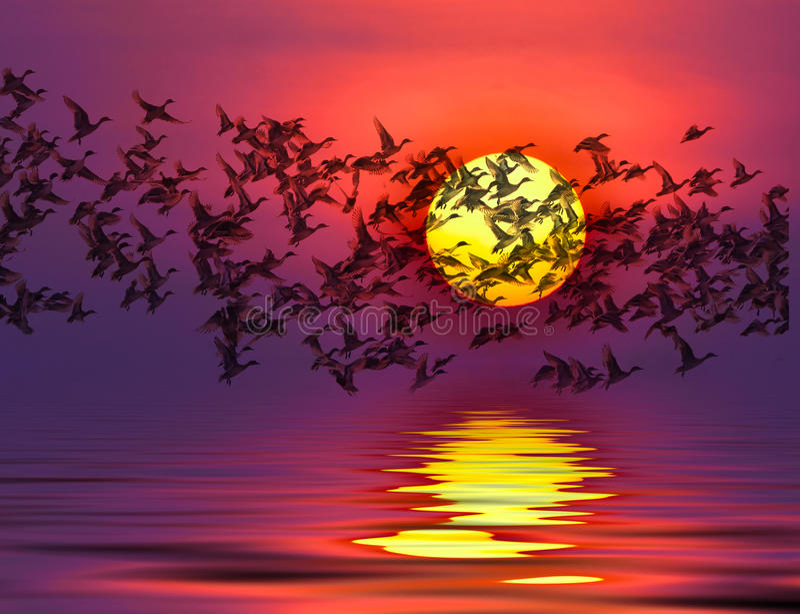 Sombra de uma silhueta dos patos da migração do pássaro ilustração royalty free