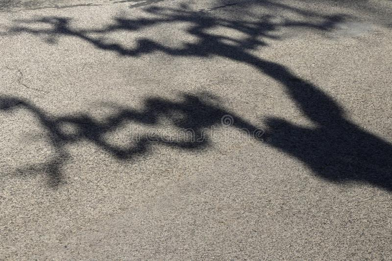 Sombra de un árbol torcido de las ramas en el camino imagen de archivo