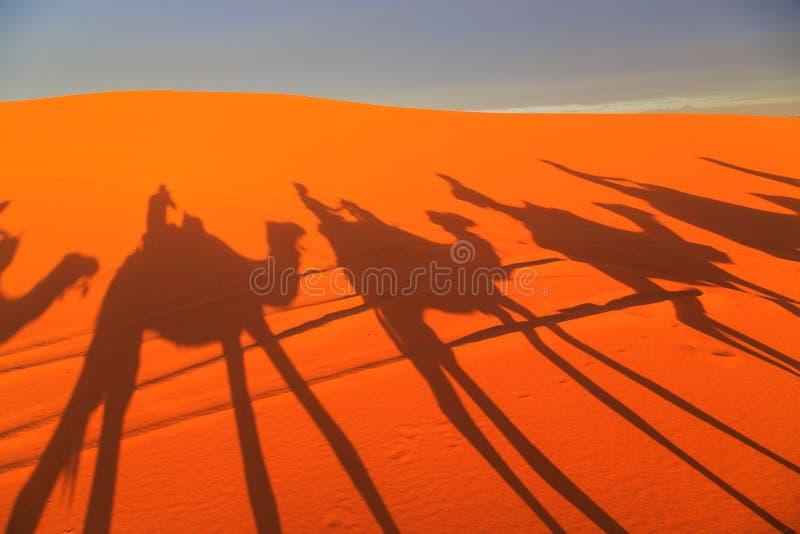 Sombra de una caravana de camellos con el turista en el desierto en los soles foto de archivo libre de regalías