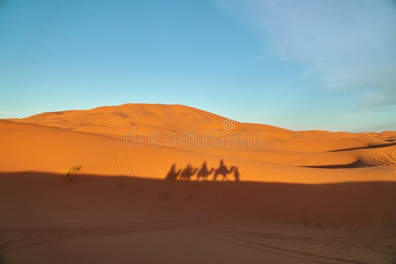 Sombra de una caravana del camello en una duna de arena en el desierto foto de archivo