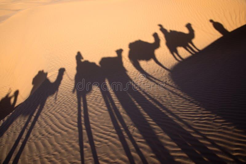Sombra de una caravana del camello en la arena, Túnez imagen de archivo libre de regalías