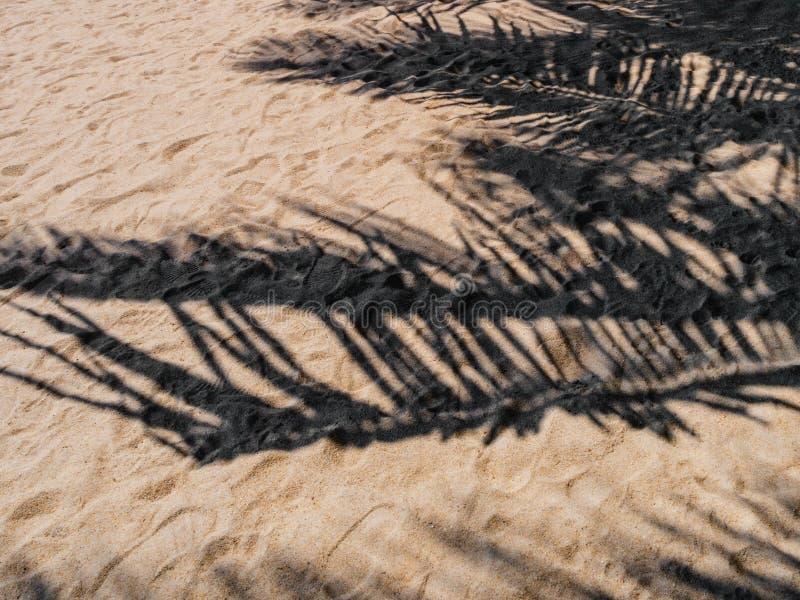 Sombra de una palmera imagenes de archivo