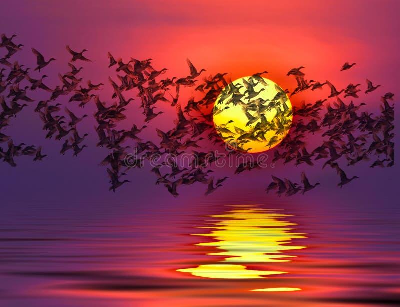 Sombra de una silueta de los patos de la migración del pájaro libre illustration