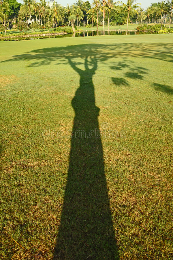 Sombra del árbol foto de archivo libre de regalías