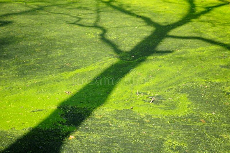 Sombra del árbol imagen de archivo