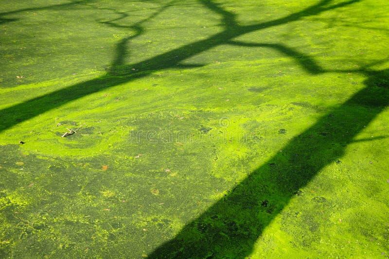 Sombra del árbol imagen de archivo libre de regalías