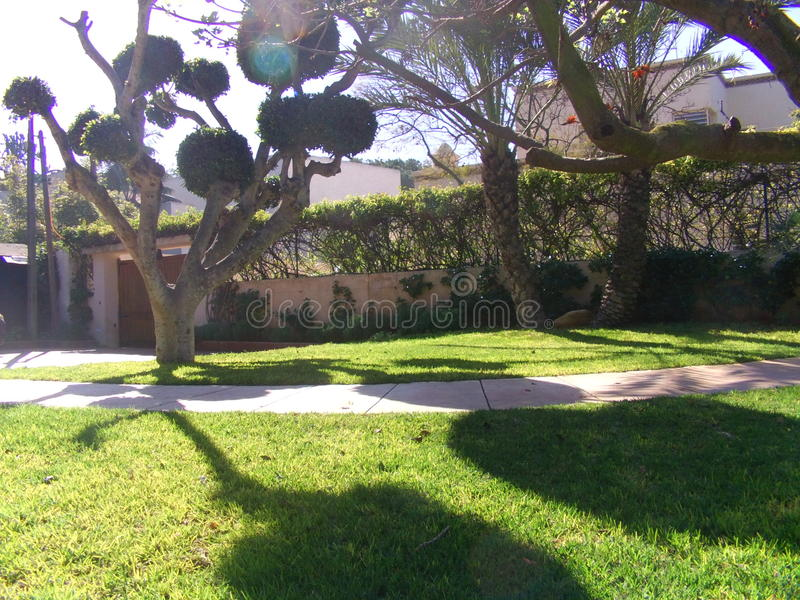 Sombra del árbol foto de archivo