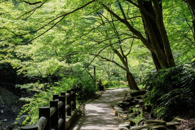 Sombra del árbol del parque de la trayectoria de Japón imagenes de archivo