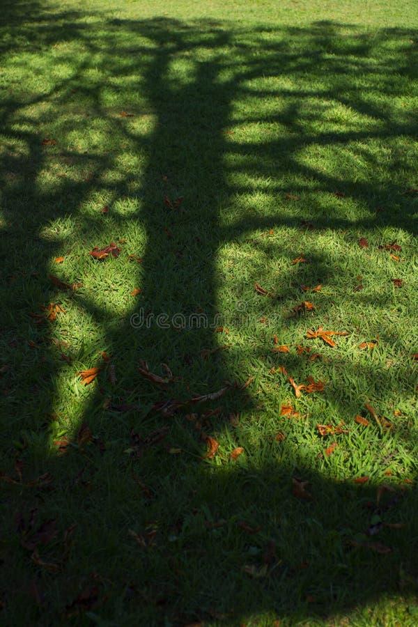 Sombra del árbol en un prado fotografía de archivo libre de regalías