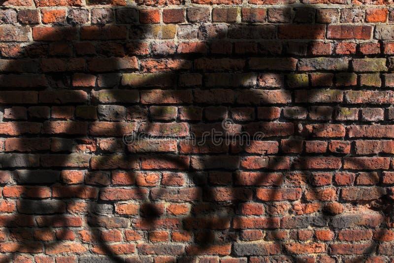 Sombra del ciclista en la pared foto de archivo libre de regalías