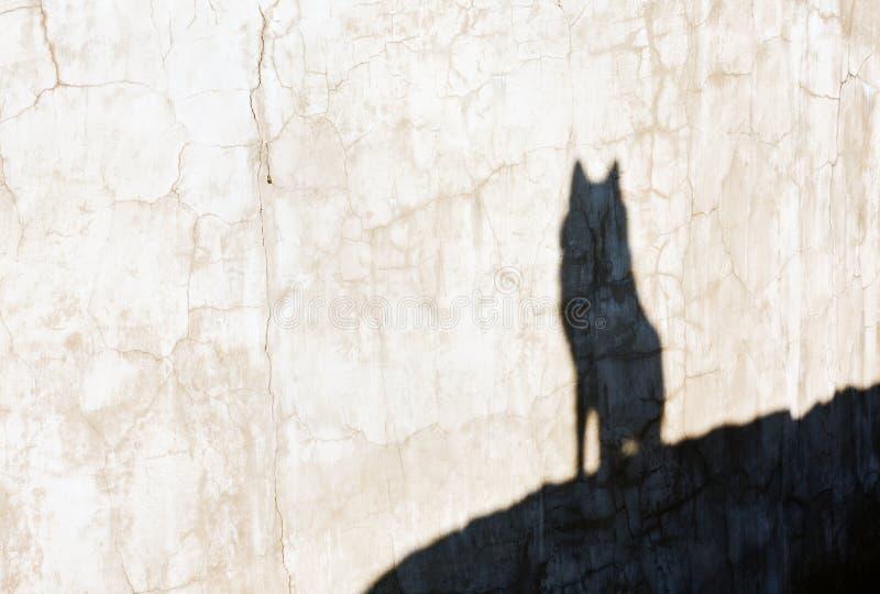 Sombra del lobo fotografía de archivo