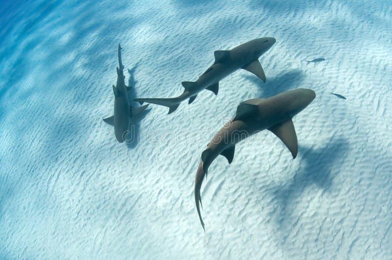 Sombra del tiburón foto de archivo