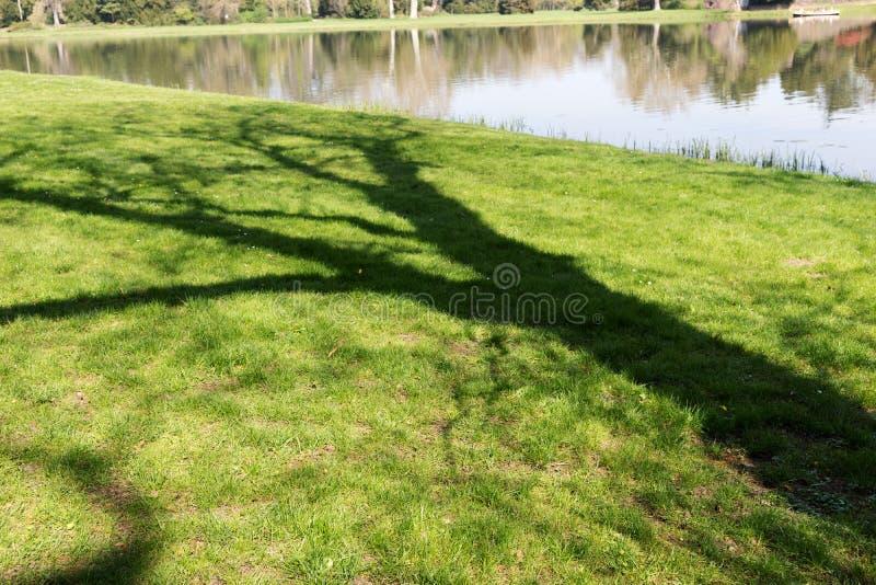 Sombra del tronco de ?rbol en el prado verde imágenes de archivo libres de regalías