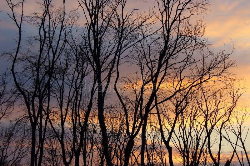 Sombra en puesta del sol imagen de archivo