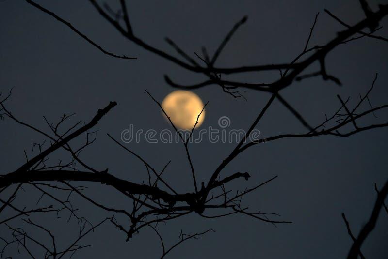 Sombra fantasmagórica de las hojas muertas del árbol en la noche oscura foto de archivo libre de regalías