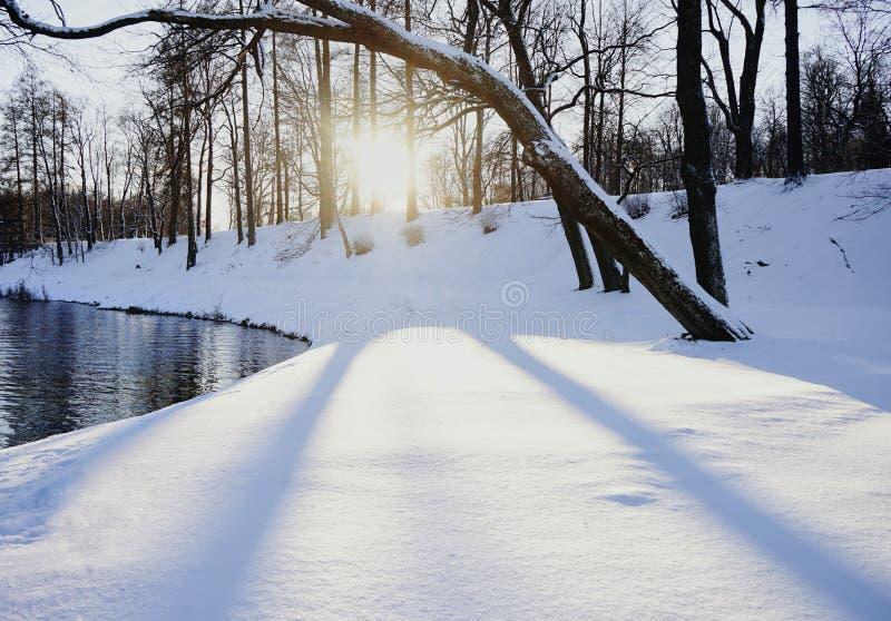 sombra fria das árvores da água do lago do dia do sol da luz solar do dia da neve do inverno fotos de stock