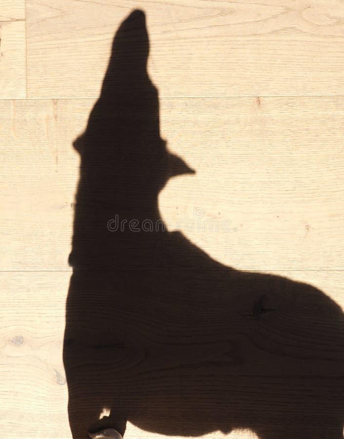 Sombra grande de um cão pequeno fotos de stock royalty free