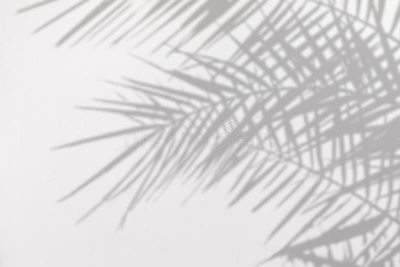 Sombra gris de hojas de palma naturales en una pared texturizada concreta blanca imagen de archivo libre de regalías