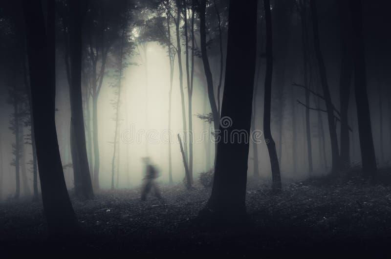 Sombra na floresta assombrada imagens de stock royalty free