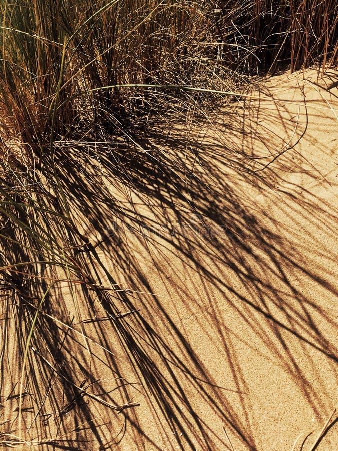 A sombra nas dunas de areia fotos de stock