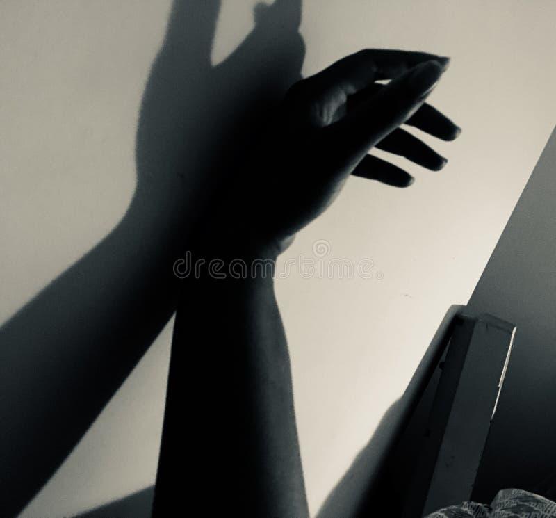 Sombra preguiçosa imagem de stock