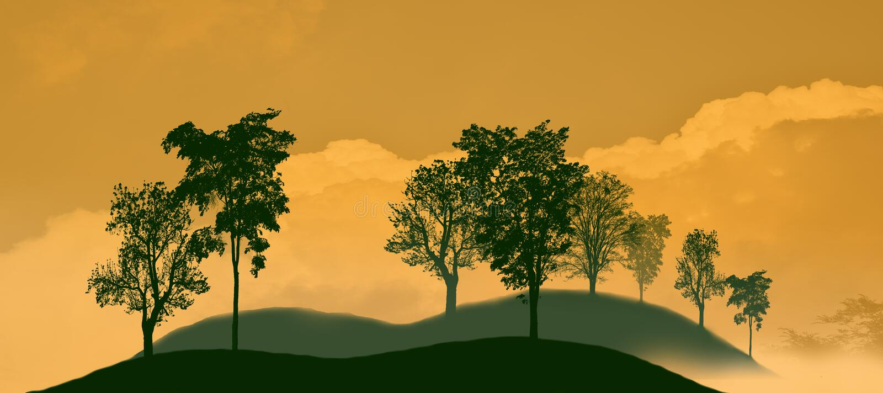 Sombra preta da árvore na montanha Fundo alaranjado branco foto de stock royalty free