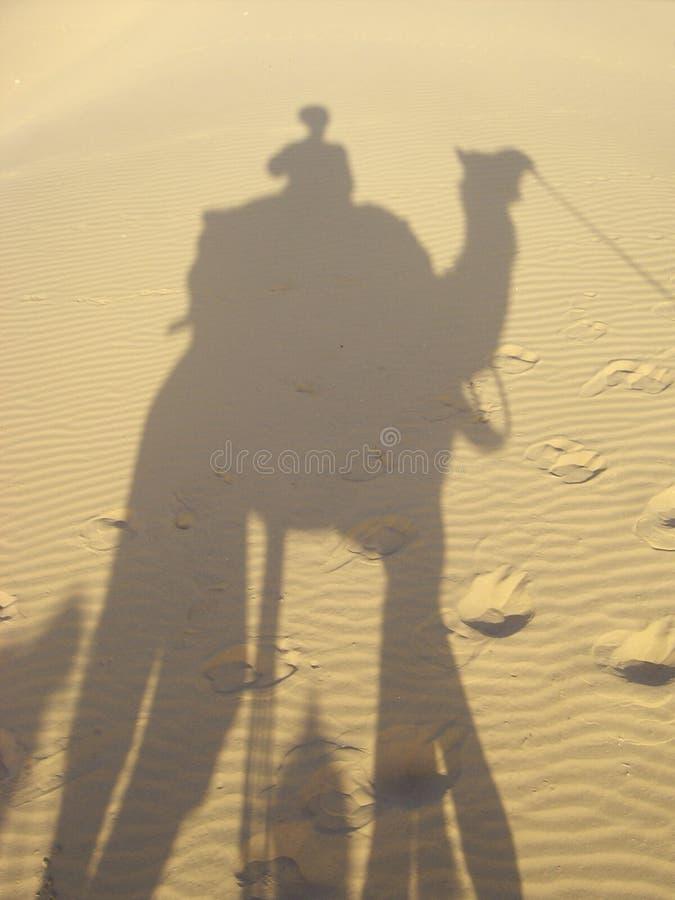 Sombra y camello imagen de archivo