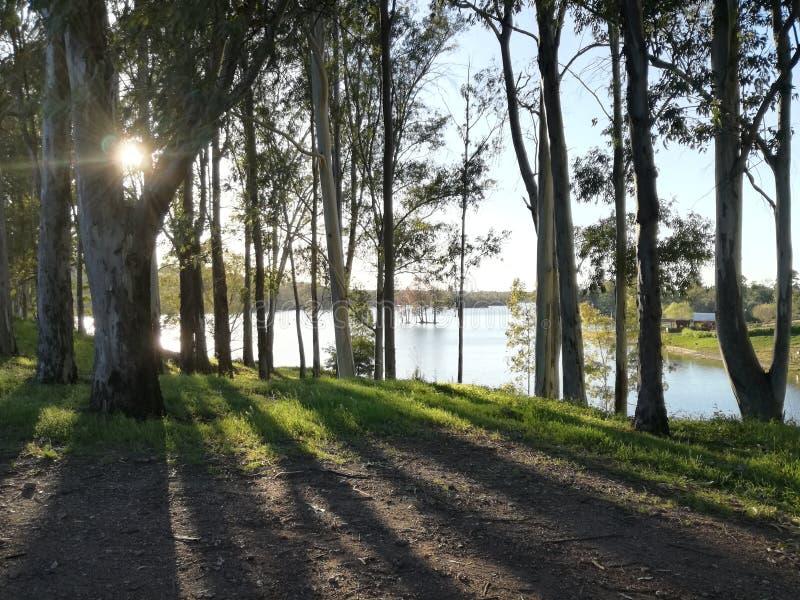 Sombra y rayos de sol del árbol por el mértola de mina de são Domingo del lago imagen de archivo
