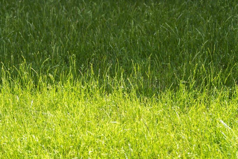 Sombra y sombra del prado en soleado fotos de archivo libres de regalías