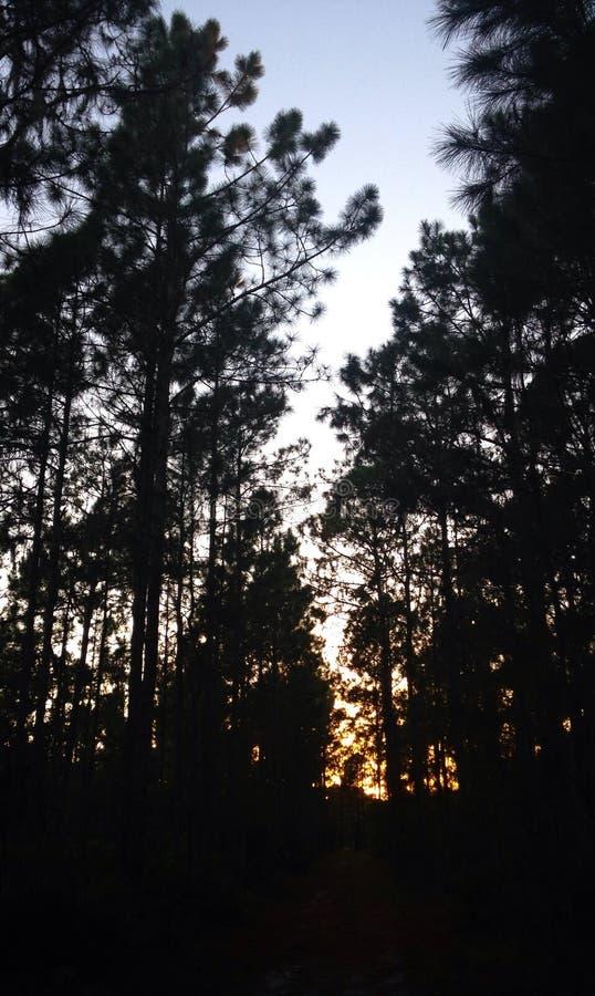 Sombras antes da obscuridade fotos de stock