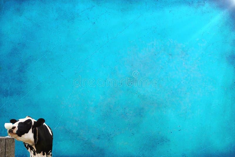 Sombras Antiqued del fondo azul con glas del vino de la vaca de Holstein que huelen con leche fotos de archivo libres de regalías