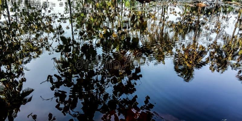 Sombras da água e da árvore imagens de stock