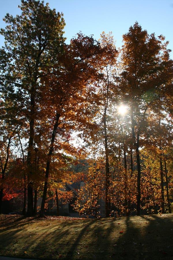 Sombras da árvore imagens de stock