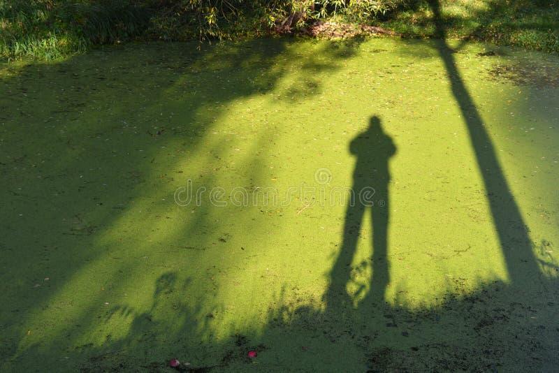 Sombras da árvore e do fotógrafo na água verde com lentilha-d'água foto de stock