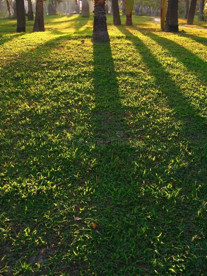 Sombras da carcaça de Sun da tarde fotografia de stock royalty free