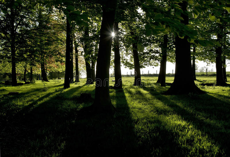 Sombras da carcaça de Sun de ajuste com um spinney das árvores imagem de stock