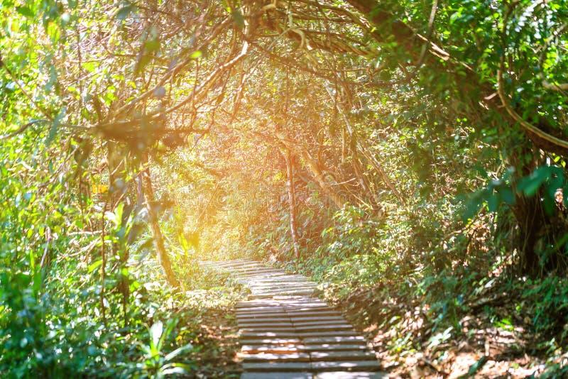 Sombras da carcaça de Sun em uma passagem pavimentada alinhada fotografia de stock royalty free