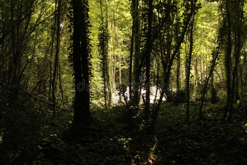 Sombras das árvores de Forrest fotos de stock