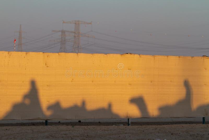 Sombras de cavaleiros do camelo em Abu Dhabi foto de stock