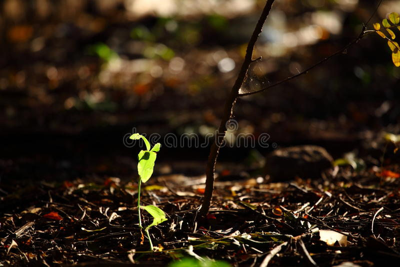 Sombras de hojas imagenes de archivo