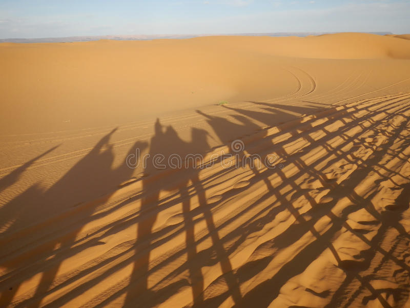 Sombras de la caravana del camello en desierto del Sáhara imagen de archivo