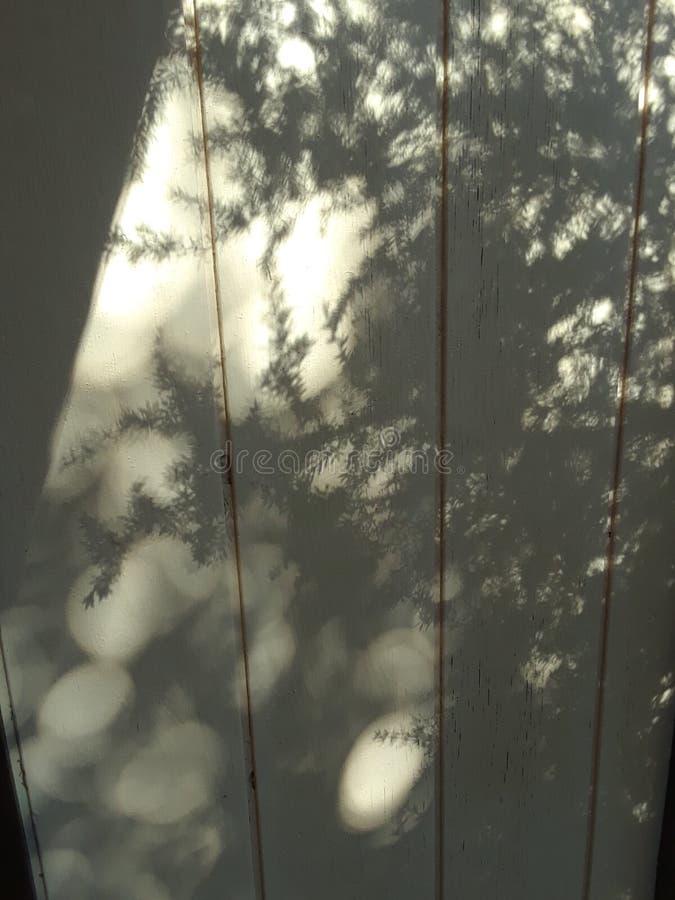 Sombras de la mañana imagenes de archivo