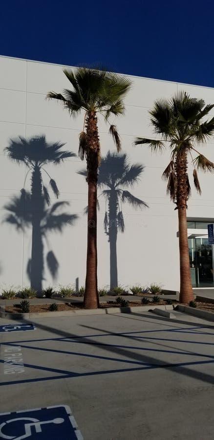 Sombras de la palmera en el fondo blanco con el cielo azul - sueño de California fotografía de archivo