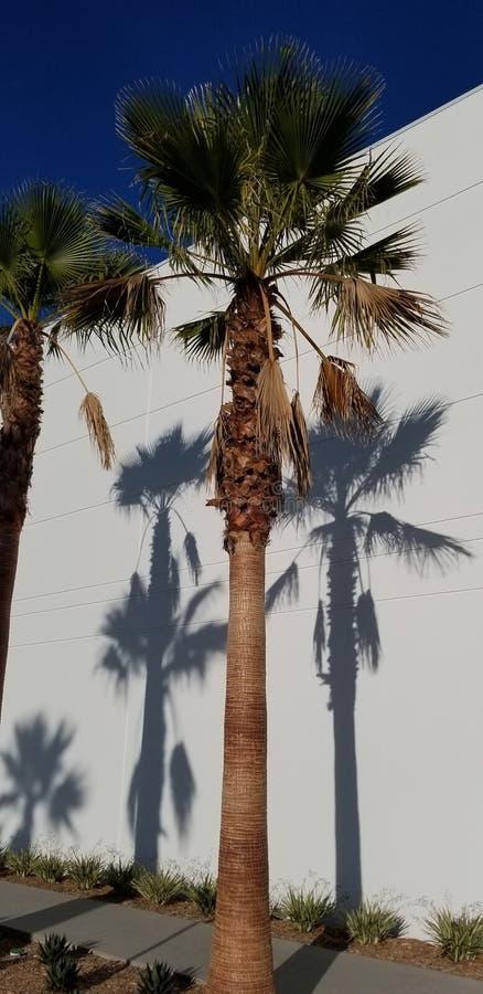 Sombras de la palmera en el fondo blanco con el cielo azul - sueño de California fotos de archivo