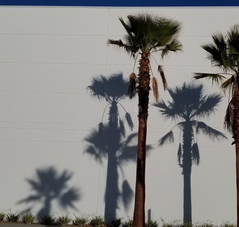 Sombras de la palmera en el fondo blanco con el cielo azul - sueño de California fotos de archivo libres de regalías
