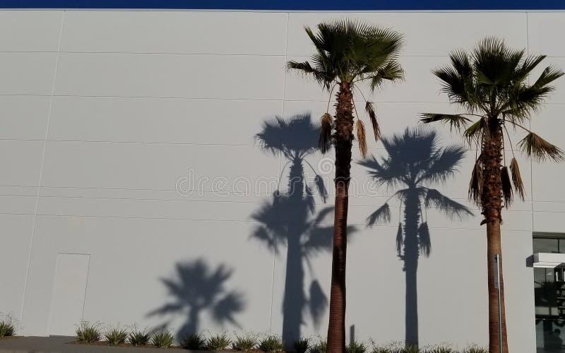 Sombras de la palmera en el fondo blanco con el cielo azul - sueño de California foto de archivo libre de regalías