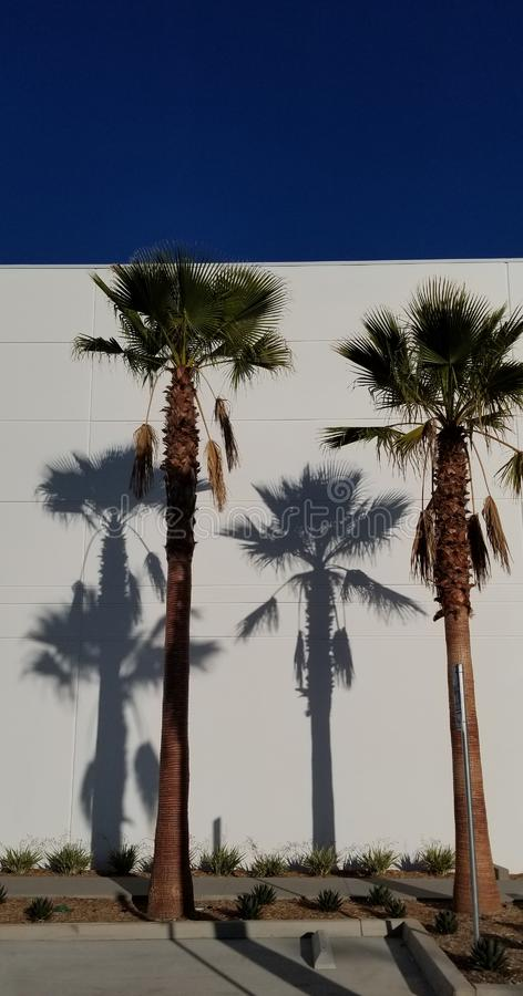 Sombras de la palmera en el fondo blanco con el cielo azul - sueño de California imagen de archivo libre de regalías