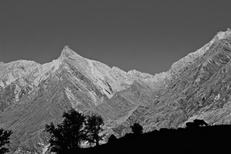 Sombras de las ovejas en primero plano con la montaña rugosa dentada fotografía de archivo libre de regalías