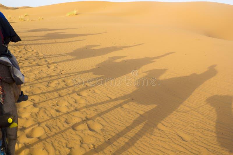 Sombras de los camellos fotos de archivo