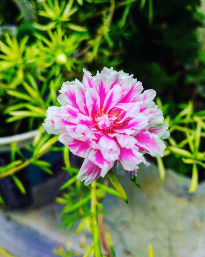 Sombras de una flor de la floración foto de archivo libre de regalías